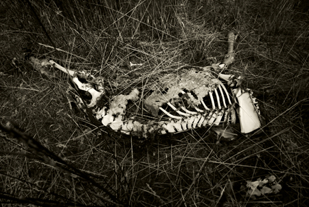 Animal Carcass by Mark Gilmore